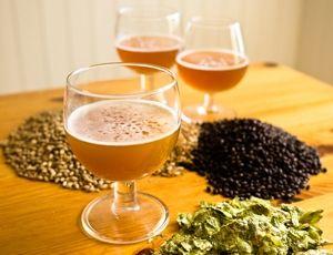 Workshop cervejeiro com inscrição gratuita